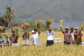 Bupati dan kelompok tani Samosir panen bersama