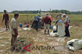 25.965 hektare sawah tadah hujan di Langkat