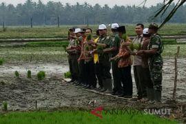 Distanketapang Langkat-petani Langkat tanam padi 200 hektare