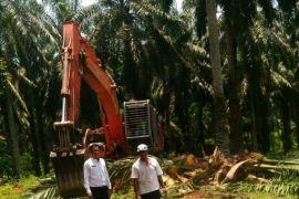 Kementerian LHK tertibkan ratusan pohon kelapa sawit