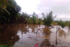 Banjir Sayur Matinggi sisakan kerugian bagi petani