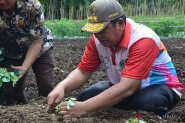 Tingkatkan sektor pertanian, wali kota tanam sawi