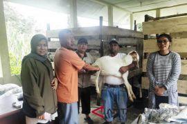 Tapanuli Selatan terima bantuan Kambing Etawa untuk petani