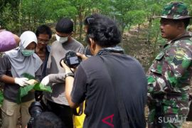 Kodim 0205-OIC selidiki kematian bayi orangutan