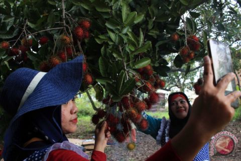Wisata Petik Buah Rambutan
