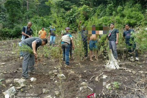 Polres Madina temukan 1 hektar lahan ganja di Siobon