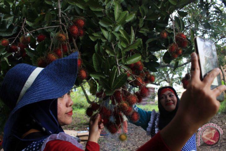 Wisata Petik Buah Rambutan
