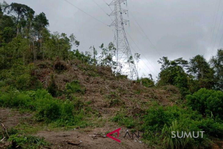 Pembalakan hutan Parapat terkesan dibiarkan