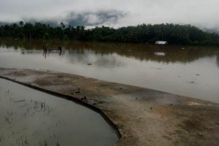 Ratusan hektare sawah di Tapsel terendam