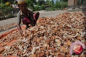 Harga Kopra di Gorontalo Utara Turun