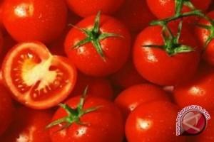 BPS: tomat picu Manado deflasi 1,13 persen