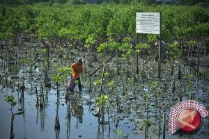 Bergerak Bersama Selamatkan Mangrove