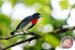Hutan Popayato-Paguat Habitat 157 Jenis Burung