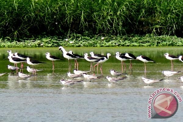 """""""Biota"""" Sensus Burung Air Di Dua Lokasi"""