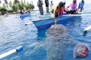 Warga antusias saksikan hiu paus di desa botubarani