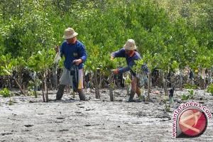 DPRD Pohuwato Tinjau Kerusakan Mangrove Tanjung Panjang