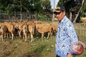 Bupati Hamim Nilai UMKM Pilar Perekonomian di Daerah