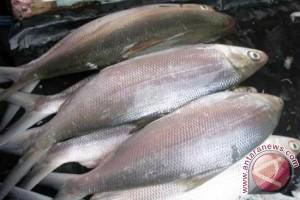 Harga ikan dan ayam merangkak naik jelang Ramadhan