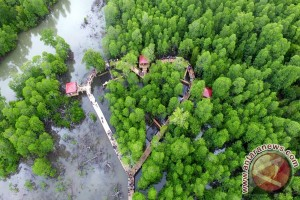 Ribuan Warga Padati Lokasi Wisata Tracking Mangrove