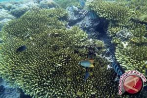 Pemerintah hitung kerugian perusakan karang Raja Ampat