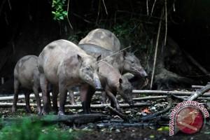 BKSDA Sulut-Gorontalo Awasi Perdagangan Empat Satwa