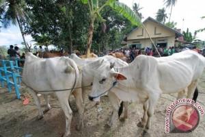 Pemkab Gorontalo Vaksin 25.000 Sapi Cegah Antraks