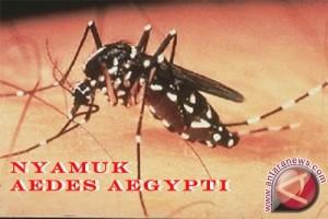 Peneliti temukan temperatur ideal bagi nyamuk untuk sebarkan penyakit