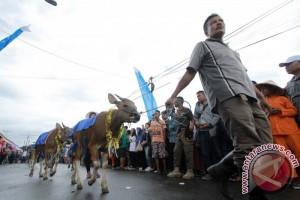 Karnaval Anak Sapi di Bone Bolango