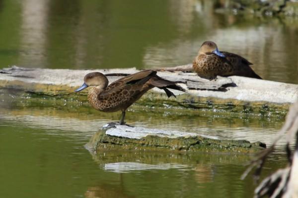 Gorontalo Berpotensi Destinasi Wisata Pengamatan Burung