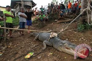 Nelayan Gorontalo Enggan Melaut Akibat Kemunculan Buaya
