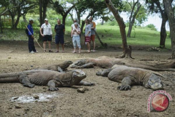 Pendapatan Taman Nasional Komodo Januari-April Rp9,4 Miliar