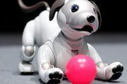Robot Anjing Aibo Punya Memori Kenali 100 Wajah Manusia