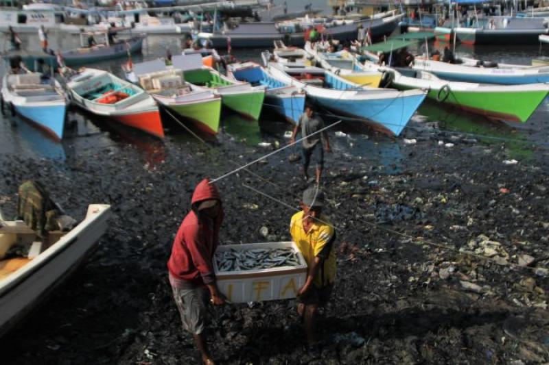 Ekspor Hasil Perikanan Gorontalo Capai 40 Ton