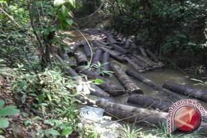 Perambah culik staf Hutan Harapan usai pengamanan