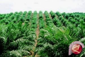 Luas perkebunan sawit Jambi capai 689.966 hektare