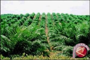 Potensi perkebunan menunjang perekonomian Jambi