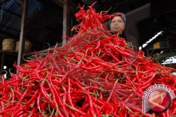 Harga cabai di Jambi turun Rp2.000/kg