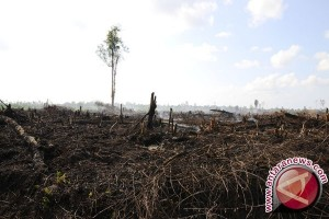 BRG petakan wilayah restorasi lahan gambut Jambi