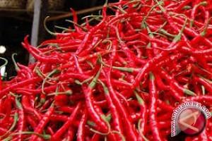Harga cabai merah naik tajam di Jambi