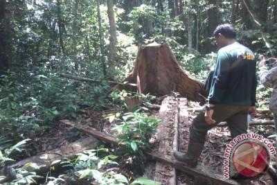 Menjaga hutan rawa gambut terluas di Asia Tenggara dari ancaman