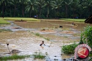Musim tanam di Batanghari gagal akibat banjir
