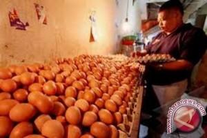 Harga telur ayam ras di Jambi Rp22.400 per kilogram