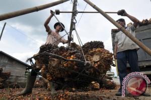 Pabrik beroperasi, harga jual sawit warga Tanjabtim naik