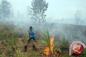 BPBD Batanghari sebut 12 hektare kawasan hutan  terbakar