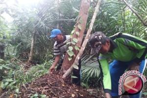 Petani Tanjabtim tanam lada di hutan gambut