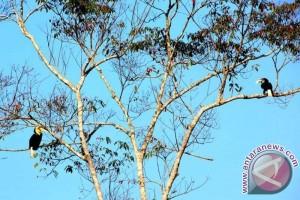 """Mengintip rumah burung langka di """"Hutan Harapan"""""""