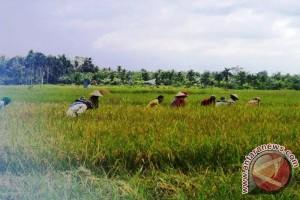 Tanjabtim targetkan cetak 650 hektare sawah