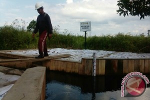 Condition Of Peat Forests In Londerang Jambi Critical