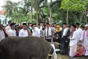 Zola kurban sapi di Kabupaten Tebo