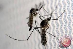 Nyamuk lebih suka golongan darah O